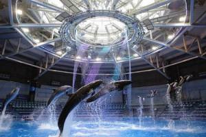 dolphin_day-w480